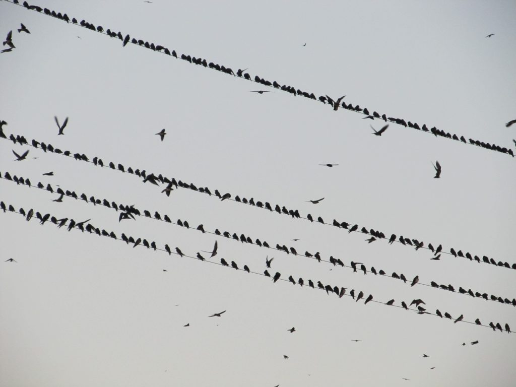 A picture of lots of birds