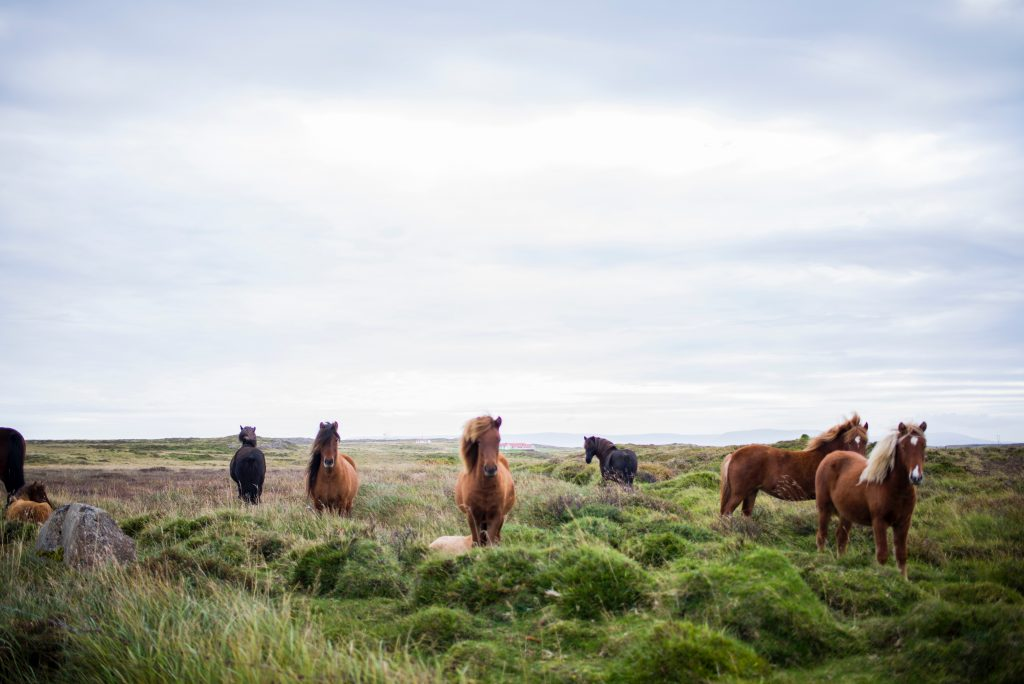 A picture of wild horses