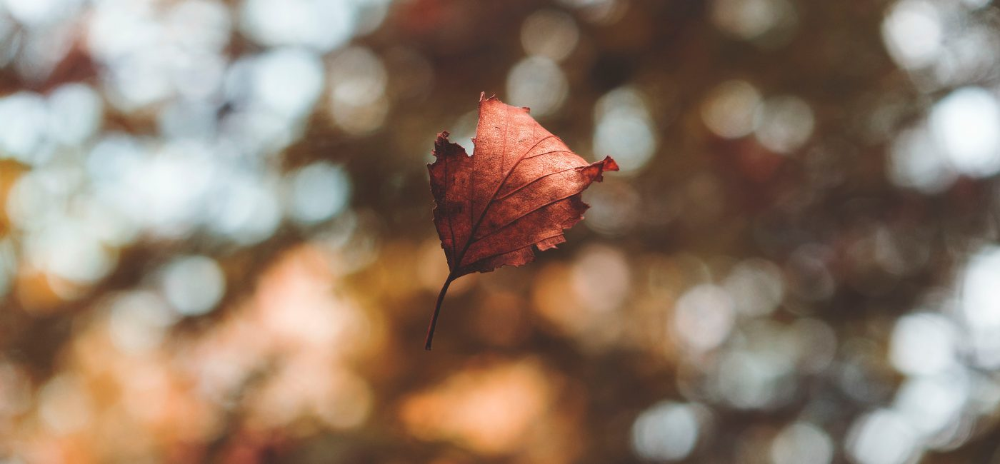 A picture of a falling leaf