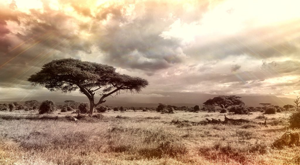 A picture if the African Savannah